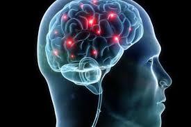 Edoardo Boncinelli: Mente e cervello