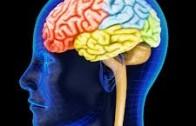 Jean-Didier Vincent: Voyage extraordinaire au centre du cerveau