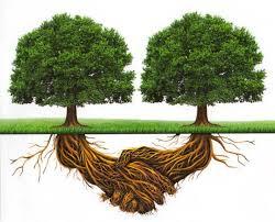 Stefano Mancuso:  Alla radice della intelligenza delle piante