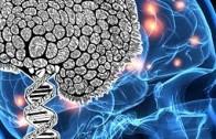 Salvatore Maria Aglioti: Il Cervello Mistico