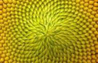Elena Magnanini, Simone Rebegoldi:  La trama dei numeri di Fibonacci
