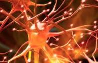 Andrea Poli: Controllo delle malattie degenerative: una chiave di lettura evoluzionistica