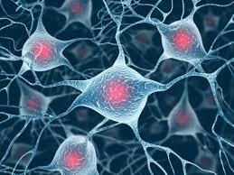 Simon Laughlin: Cosa rende il cervello efficiente dal punto di vista energetico?