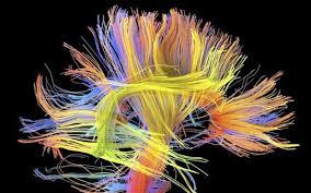 Michio Kaku: The Future of the Mind
