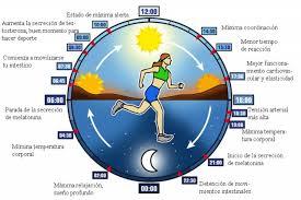Paolo Sassone Corsi: I Cicli circadiani: l'orologio della Vita