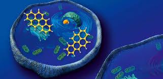 """Federico Cremisi: Le biotecnologie """"omics"""": espressione genica e differenziamento cellulare"""