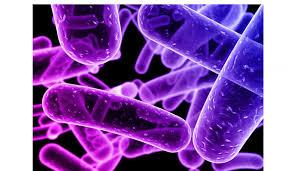 Stefania Stefani: Prima lezione di microbiologia