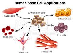 Valentina Castiglioni: Cellule adulte staminali e rigenerazione dei tessuti