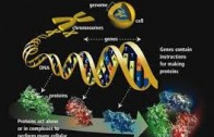 Giuseppe Macino: Epigenetica ed i piccoli RNA