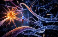 Federico Luzzati: C'era una volta un neurone…